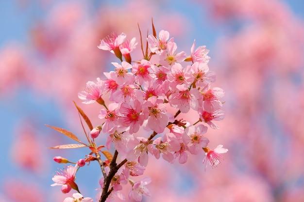 Różowy Kwiat Wesoły Kwiat Kwitnący W Tle Drzewa Premium Zdjęcia