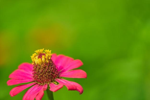 Różowy Płatek Kwiatu Z łodygami Pyłków, Zamknięte Premium Zdjęcia