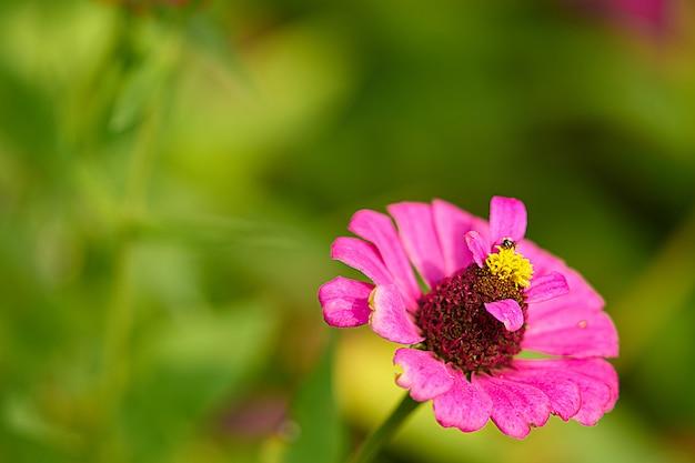 Różowy Płatek Kwiatu Z łodygami Pyłków, Zamknięty, Z Pszczołą Premium Zdjęcia