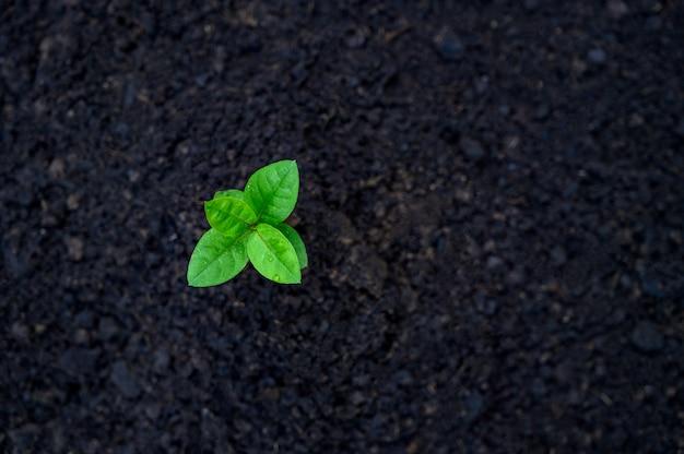 Rozwój Wzrostu Sadzonek Sadzenie Sadzonek Młodej Rośliny W świetle Poranka Na Przyrodę Premium Zdjęcia