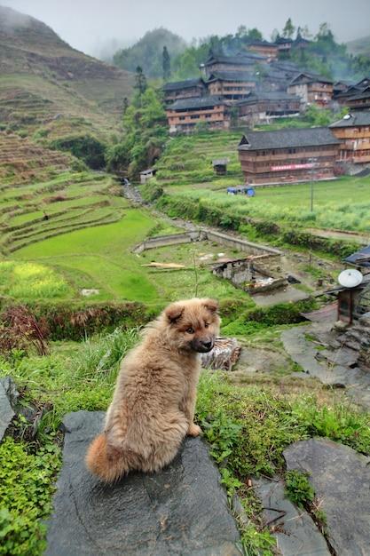 Rudowłosy Kudłaty Szczeniak Kundel Stoi Na Kamieniu Na Tle Chińskiej Wioski Etnicznej Położonej W Górzystym Obszarze Południowo-zachodnich Chin. Premium Zdjęcia