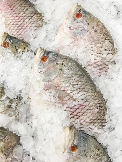 Ryby giant gourami Darmowe Zdjęcia
