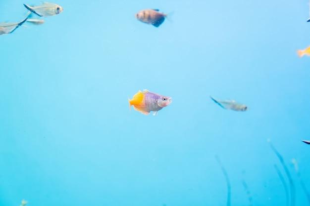 Ryby I Krajobraz W Akwarium Premium Zdjęcia