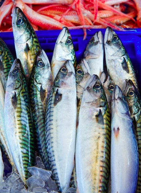 Ryby Makrela Z Morza śródziemnego Ułożone Premium Zdjęcia