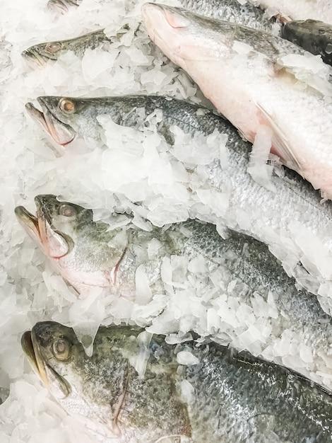 Ryby seaperch lub ryba biała ryba Darmowe Zdjęcia