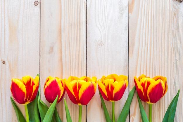 Rząd Czerwonych I żółtych Tulipanów Na Jasnym Drewnianym Tle Wzdłuż Ogrodzenia. świeże Delikatne Kwiaty. Skopiuj Miejsce Premium Zdjęcia