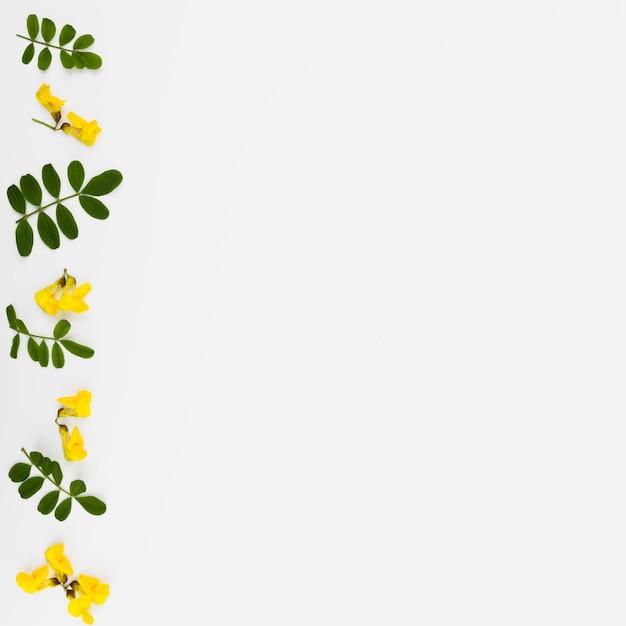 Rząd żółty Kwiat I Liście Gałązka Na Białym Tle Darmowe Zdjęcia