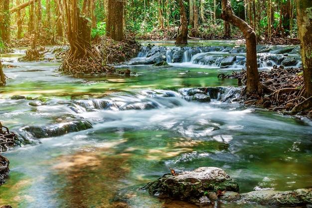 Rzeka kamień i drzewo kolorowi, widoku wodny rzeczny drzewo w lesie Premium Zdjęcia