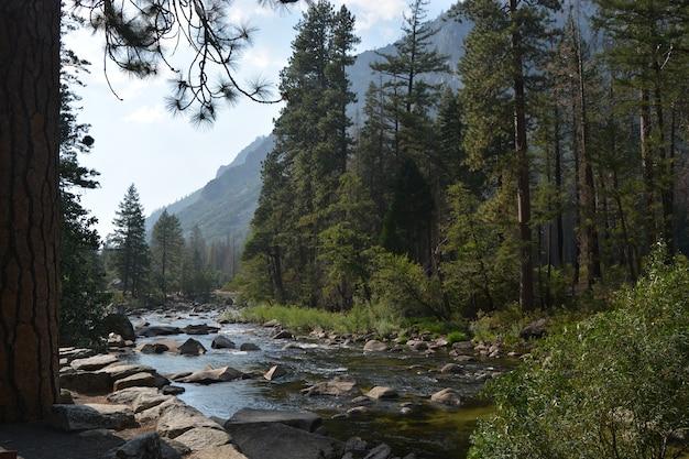 Rzeka W Naturze Darmowe Zdjęcia