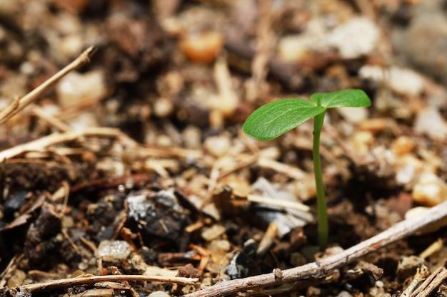 Sadzenie Drzewa Rosnącego Na Drzewie Przez Glebę I Wodę Dobrej Przyrody Na świecie Premium Zdjęcia