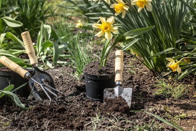 Sadzenie Kwiatów W Ogrodzie, Narzędzia Ogrodnicze, Kwiaty Darmowe Zdjęcia