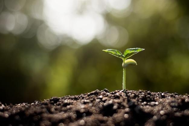 Sadzonki Rosną Z żyznej Gleby, Koncepcja Ekologii. Premium Zdjęcia