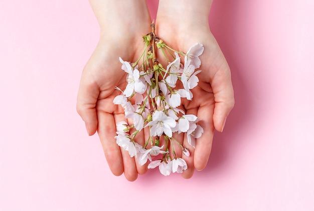 Sakura gałąź w żeńskich palmach na różowym tle Premium Zdjęcia