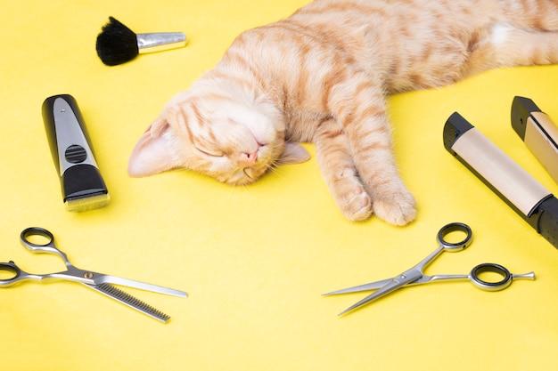 Salon Mody Kotów Premium Zdjęcia