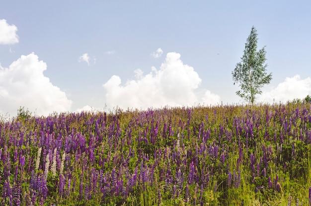 Samotne Drzewo Na Wzgórzu Z Kwitnącymi łubinami Premium Zdjęcia