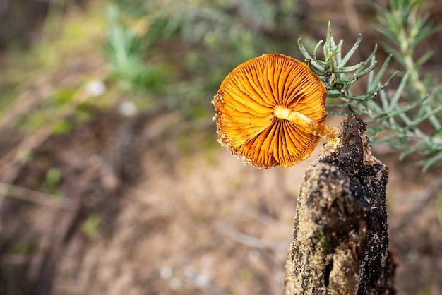 Samotny Grzyb Na Mokrym Pniu, Pomarańczowy Grzyb Z ładną Nakrętką. Premium Zdjęcia