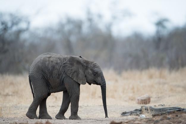 Samotny Słoń Stojący Na Ziemi Darmowe Zdjęcia