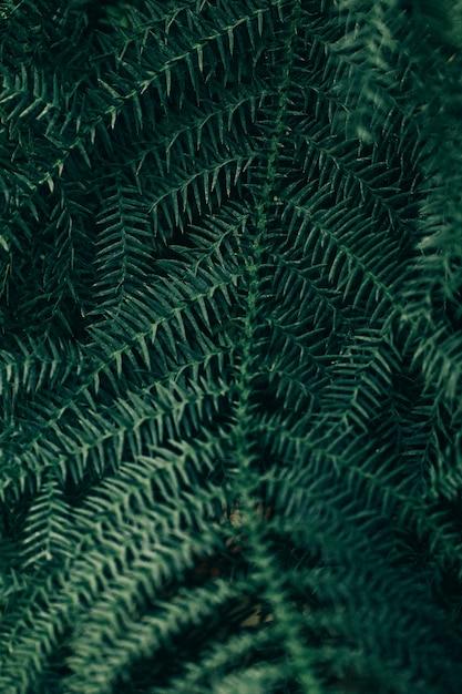 Scena botaniczna na tle Darmowe Zdjęcia