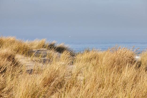 Sceneria Beachgrass Rano W Cannon Beach W Stanie Oregon Darmowe Zdjęcia