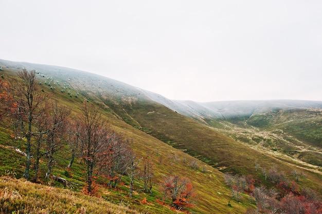 Sceniczny widok halnej jesieni czerwoni i pomarańczowi lasy śnieżysty góra wierzchołka nakrycie mgłą przy karpackimi górami na ukraina, europa. Premium Zdjęcia