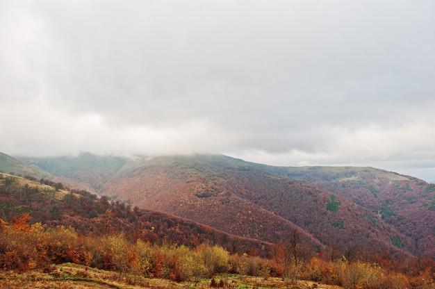 Sceniczny widok halnej jesieni czerwoni i pomarańczowi lasy zakrywa mgłą przy karpackimi górami na ukraina, europa. Premium Zdjęcia