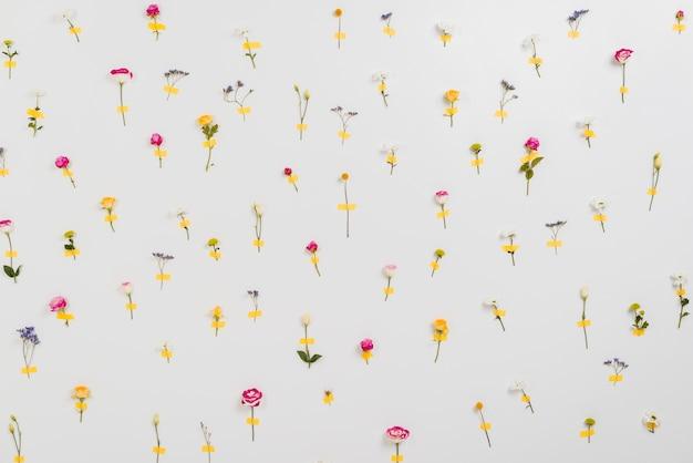 Ściana Kwiatów Zapowiadająca Wiosnę Darmowe Zdjęcia