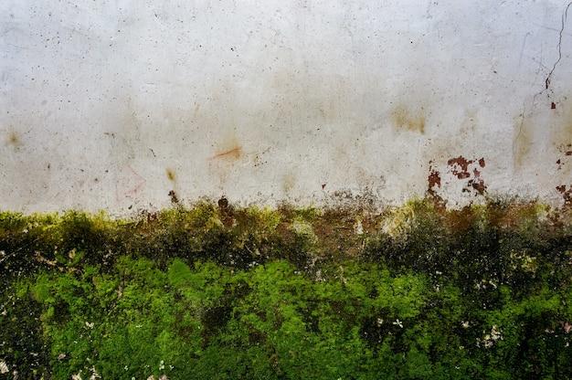 Ściana Z Mchu Darmowe Zdjęcia