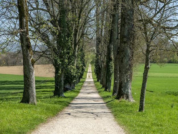 Ścieżka Pośrodku Parku Otoczona Wysokimi Drzewami Darmowe Zdjęcia
