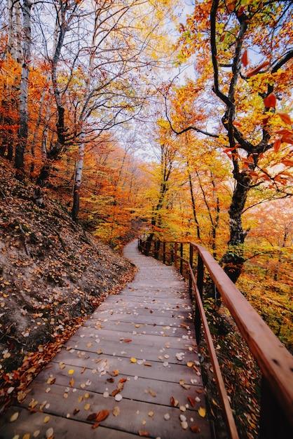 Ścieżka W Jesiennym Złocistym Lesie, Wakacje Koncepcyjne, Spacer, Relaks, Dzień Wolny, Bez Prądu Premium Zdjęcia