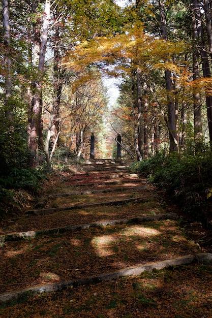 Ścieżka W Lesie Otoczonym Drzewami Pokrytymi Jesienią Kolorowymi Liśćmi Darmowe Zdjęcia