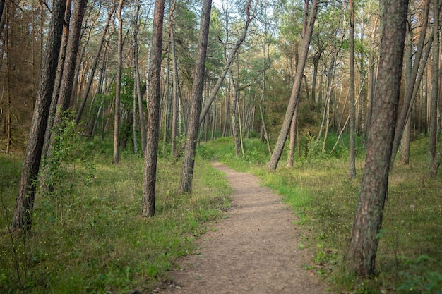 Ścieżka W Lesie Porośniętym Trawą I Drzewami W świetle Słonecznym W Ciągu Dnia Darmowe Zdjęcia
