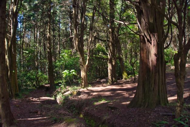 Ścieżka W Lesie Darmowe Zdjęcia