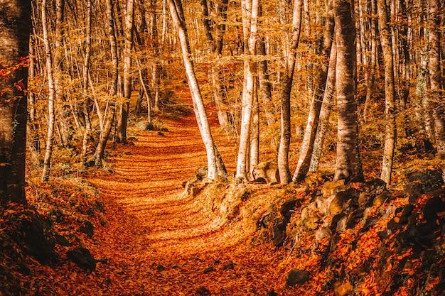 Ścieżka w środku lasu jesienią Premium Zdjęcia
