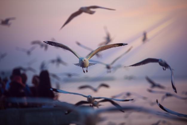 Seagull Lata Na Niebie Nad Morze Premium Zdjęcia