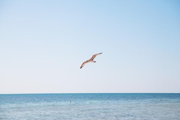 Seagull lata nad błękitnym morzem. Premium Zdjęcia