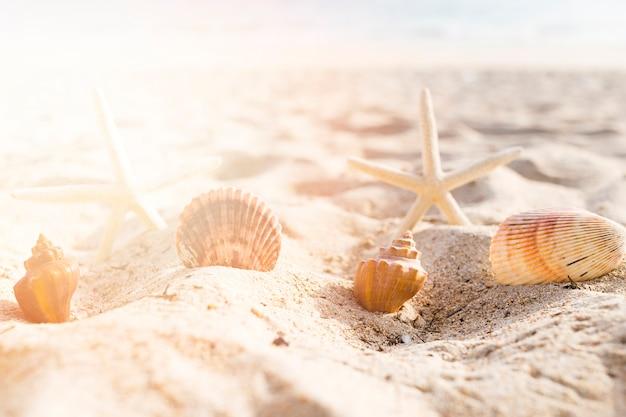 Seashells I Rozgwiazda Układaliśmy Na Piasku Przy Plażą Darmowe Zdjęcia