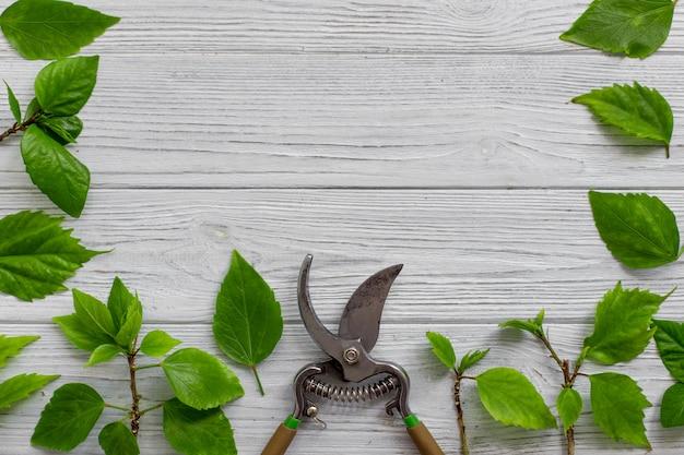 Sekator ogrodowy, gałęzie i liście zielone na białym tle rustykalnym drewniane Premium Zdjęcia