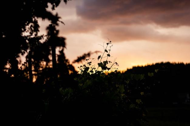 Selekcyjny Sylwetki Zbliżenia Strzał Rośliny I Drzewa Pod Pomarańczowym Niebem Podczas Zmierzchu Darmowe Zdjęcia