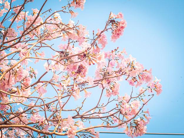 Selektywne Fokus Różowych Kwiatów W Rozkwicie. Najlepsze Tło Wiosna Premium Zdjęcia