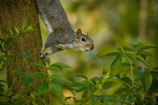 Selektywne Fokus Strzał Cute Wiewiórki Na Pniu Drzewa W środku Lasu Darmowe Zdjęcia