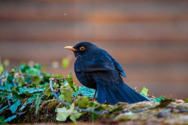 Selektywne Fokus Strzał Czarnego Ptaka Darmowe Zdjęcia