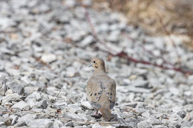 Selektywne Fokus Strzał Gołębia Stojącego Na Skałach Darmowe Zdjęcia