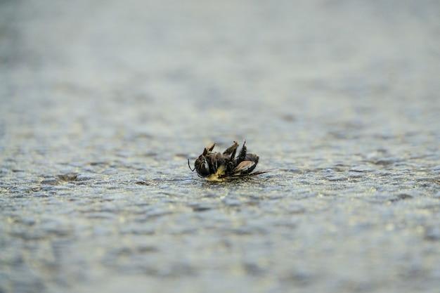 Selektywne Fokus Strzał Martwej Pszczoły Na Kamiennej Ziemi Darmowe Zdjęcia