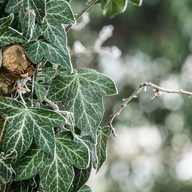 Selektywne Fokus Strzał Pięknych Zielonych Liści Na Rozmytym Tle Z Bokeh świateł Darmowe Zdjęcia