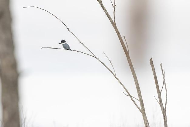 Selektywne Fokus Strzał Ptaka Stojącego Na Gałęzi Darmowe Zdjęcia
