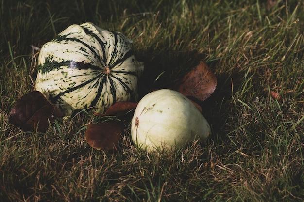 Selektywne Fokus Strzał W Połowie Uprawiane Dynie Ustanowione Na Trawie Darmowe Zdjęcia