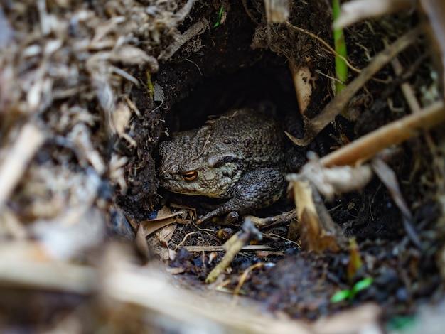Selektywne Fokus Strzał żaby W Lesie Darmowe Zdjęcia