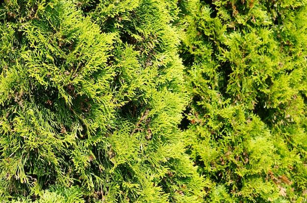 Selektywne Fokus Strzał Zielone Drzewo Ogrodowe Pokryte światłem Słonecznym Darmowe Zdjęcia