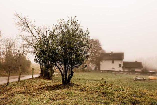 Sepia Kolorowe Zdjęcia Drzew, Biały Dom Z Mgłą W Tle Darmowe Zdjęcia