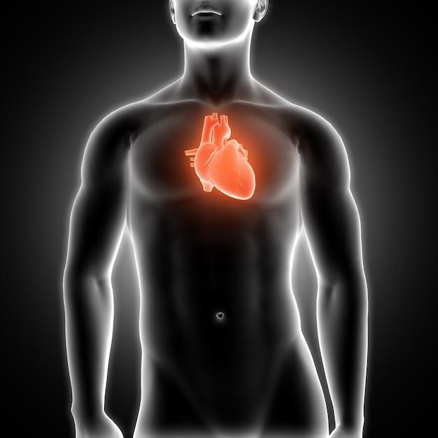 Serce Z Prześwietlenia Darmowe Zdjęcia